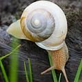Snail by Bert Mailer
