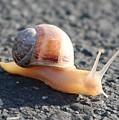 Snail  by Christy Pooschke