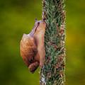 Snail Climbing The Tall Grass by Martin Belan