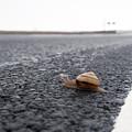 Snail Crossing... by Carol Hathaway