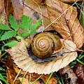 Snail Home by Allen Nice-Webb