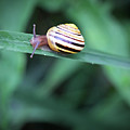 Snail In His Green Jungle by Brooke T Ryan
