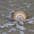 Snail In The Surf by Bill Cannon