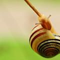 Snail  by Joe  Ng
