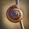 Snail On A Stick by Kelley King