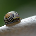Snail On Rock by Barbara Treaster