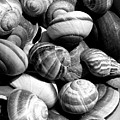 Snail Shells In Black And White by Anselmo Albert Torres