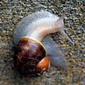 Snail snailing along