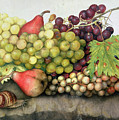 Snail With Grapes And Pears by Giovanna Garzoni
