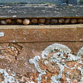 Snails At Home With Lichen by Jeff Townsend