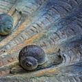 Snail's Pace by Cindy Manero