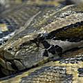 Snake At Rest. by Jacqueline Milner