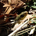 Snake In Nature by Jeremiah Wilson
