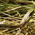 Snake In The Grass by Deborah Johnson
