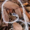Snake Skeleton by Robert Wilder Jr