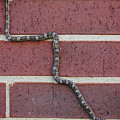 Snaking Up A Brick Wall by Lucyna A M Green