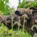Sniper by JC Findley
