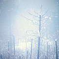 Snow And Remnants Of The Fire 2 by Tara Turner