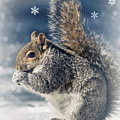 Snow And Squirrel by Rima Biswas