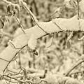 Snow Arch by LeeAnn McLaneGoetz McLaneGoetzStudioLLCcom