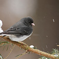 Snow Bird by Alan Lenk
