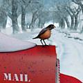 Snow Bird by Brainwave Pictures