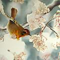 Snow Bird by Lana Haivor