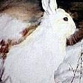 Snow Bunny by Debra Sandstrom