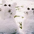 Snow Cats by Maria Joy