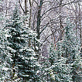 Snow-covered Forest, Wisconsin, Usa by Panoramic Images