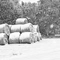 Snow Covered Hay Bales by Scott Hansen