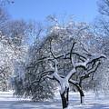 Snow-covered Sunlit Apple Trees by Byron Varvarigos