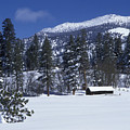 Snow Covered Trees And Cabin At Rock by Rich Reid