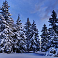 Snow Covered Trees by Ivan Slosar