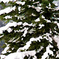 Snow Covered Trees by Jeelan Clark