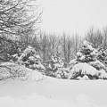 Snow Covered Wonderland by Julie Lueders