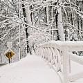 Snow Curve by Lauri Novak