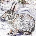Snow Day Bunny by Carol Moore