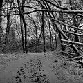 Snow Day Walk In The Woods 001 Bw by Lance Vaughn
