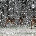 Snow Deer by David Dunham