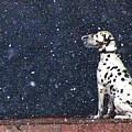 Snow Dog by Yury Bashkin