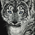 Snow Dragon Leopard by Stanley Morrison