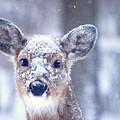 Snow by Edward Loesch