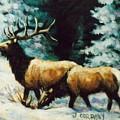 Snow Elk by JoAnne Corpany