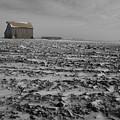 Snow Fallow by Dylan Punke