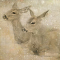Snow Fawns by Sally Banfill