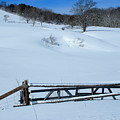 Snow Fence by Doug Mills