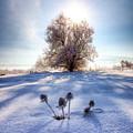 Snow Flowers by Quinn Calder