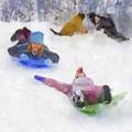Snow Fun by Francesa Miller