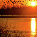 Snow Geese At Sunrise by William Jobes